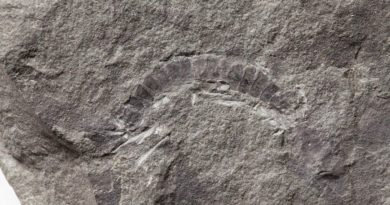 Meet the world's oldest bug, a 425-million-year-old millipede fossil