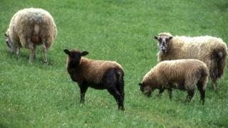 The long-running debate over greening the land