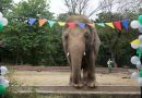 Kaavan: Elephant helped by Cher arrives in Cambodia to start a new life | World News