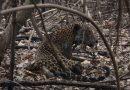 Brazil: Amazon deforestation hits 12-year high under President Bolsonaro   World News