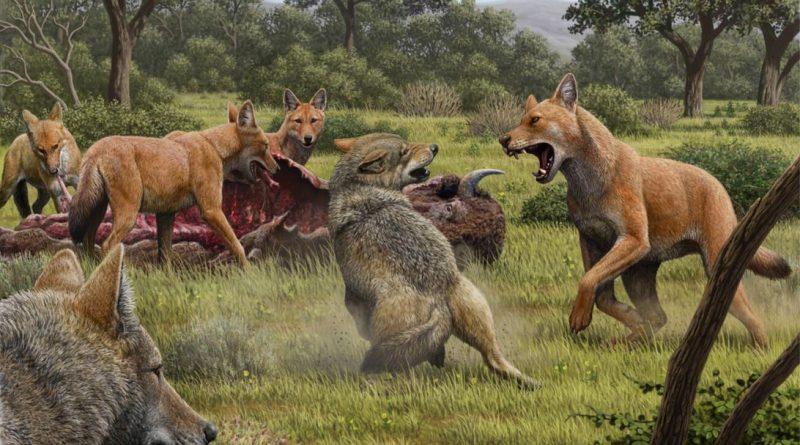 Canis Dirus Size Jfif.jpg