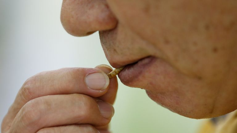 Skynews Mealworm Mealworms 5236108.jpg