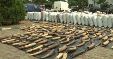 Nigeria seizes record £38m in pangolin parts and elephant tusks | World News